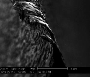 REM-Aufnahme von Skalpellklinge mechanisch geschliffen